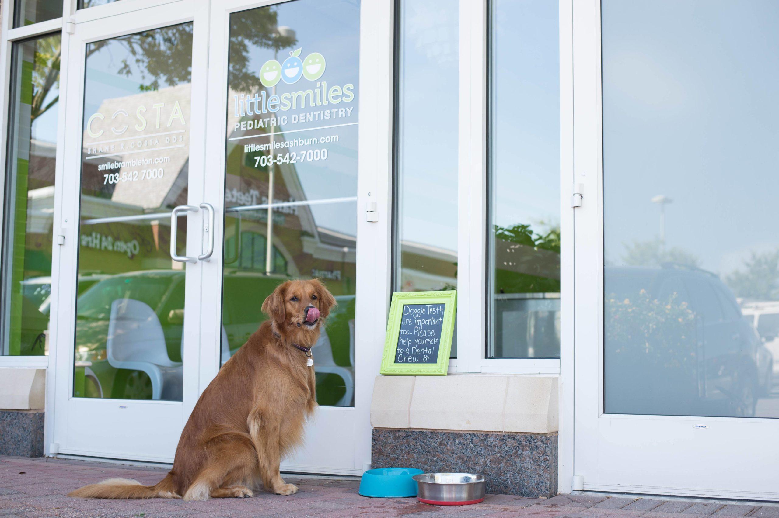 loudoun-county-veterinarians-dog-treats