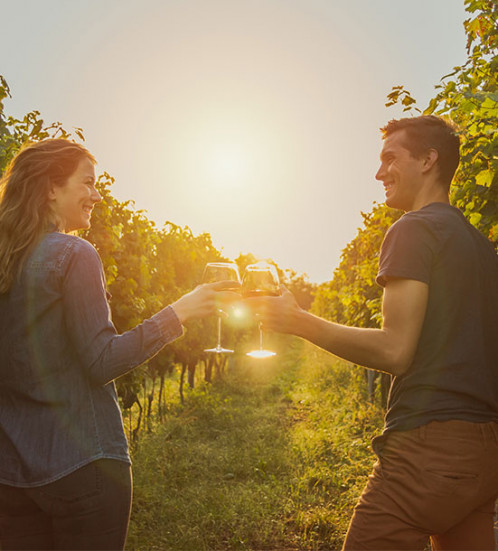 vineyard_trek